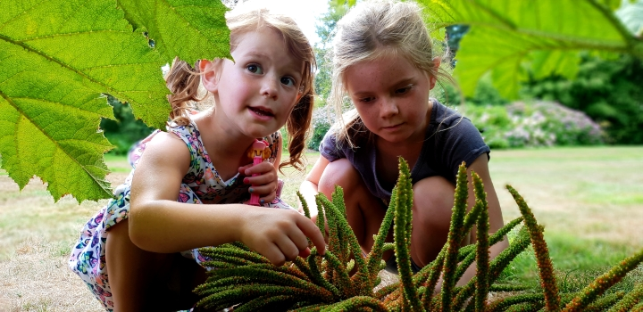 Kids exploring. Big rhubarb plant. 4 freckled faces.