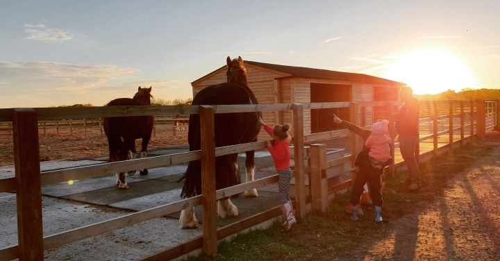 A family outside, stroking horses as the sun is setting. 4 Freckled Faces. Redwings Horse Sanctuary. Norfolk. Family time. Horses. Sunset.